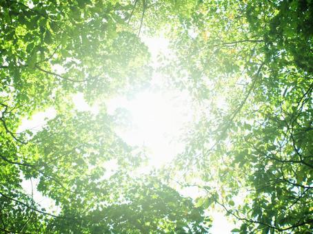 Sunbeams through the sun