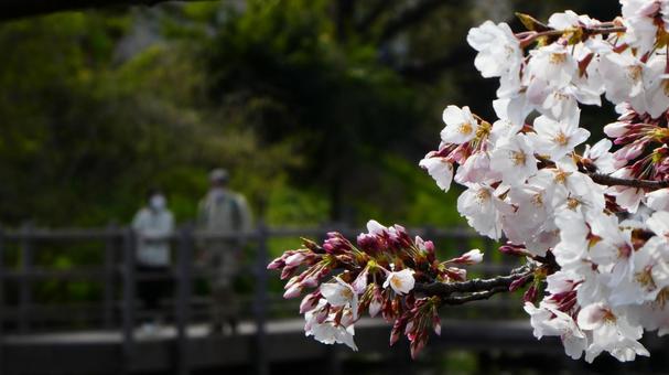 벚꽃 산책하는 부부
