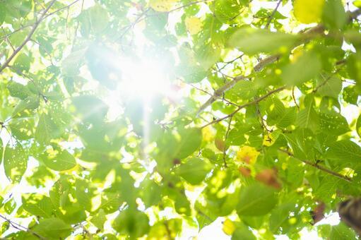 Summer sunshine_leaf