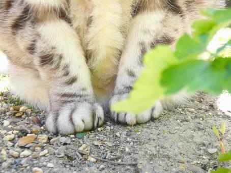 고양이의 다리