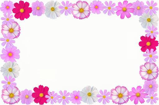 Flower frame Cosmos 4