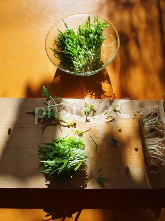 空芯菜の芽を切るの写真