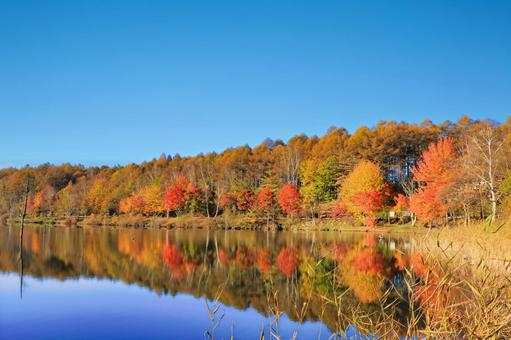 Reflection of autumn leaves on Lake Megami