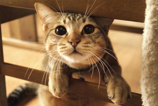 [Cat] Domestic cat Cat Cat Cat Animal
