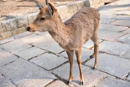 조약돌 위에서 오른쪽 옆을 향 겨울 머리의 사슴