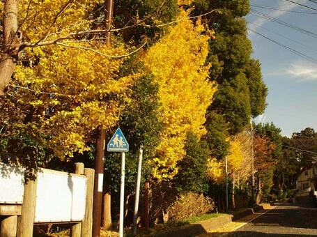 가을 하늘 거리