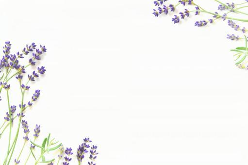 라벤더의 프레임 배경 01