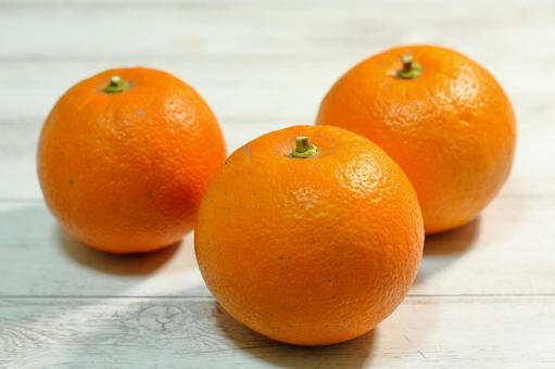 오렌지 : 비터 오렌지