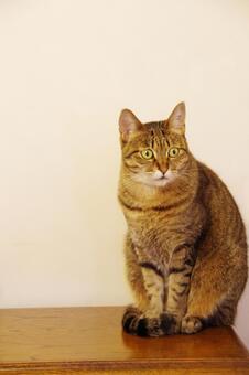 Question cat lacco 5