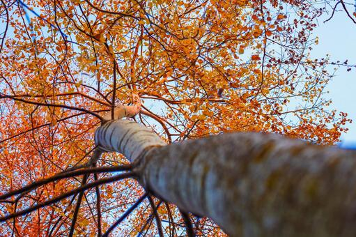 Autumn leaves trees 47