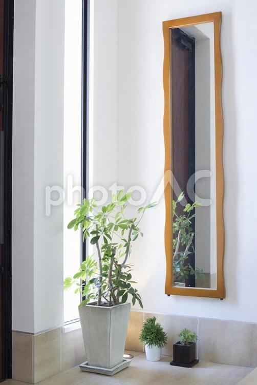 植物のある生活#5の写真