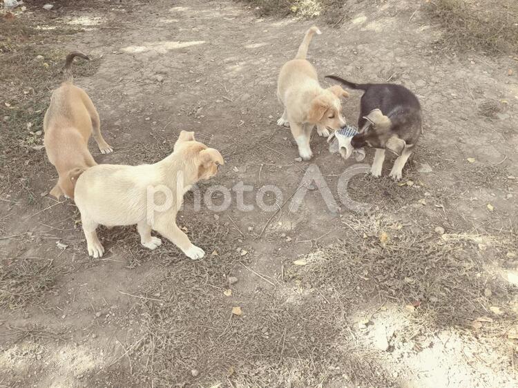 子犬たちの写真