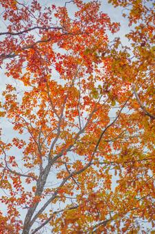 Autumn leaves trees 2
