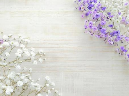 White and purple gypsophila