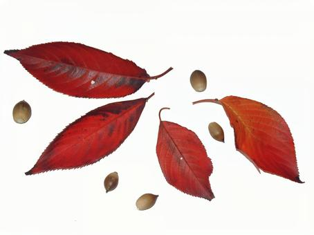 Fallen leaves and acorn