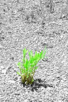 Summer grass of dry ground # 15