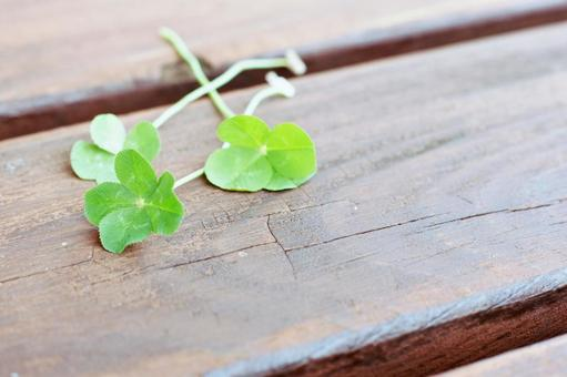 Four leaf clover that carries happiness