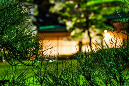 Japanese houses and pine