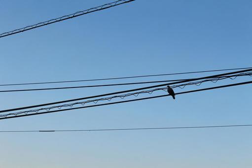 Sky and pigeon