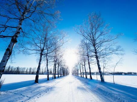 Winter white birch bouquet