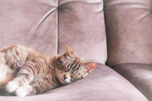 A cute tabby cat taking a nap comfortably