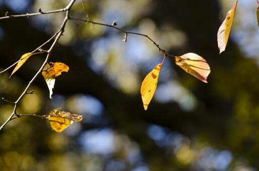 Dead leaves 6