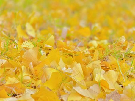 Ginkgo carpet yellow wallpaper copy space background
