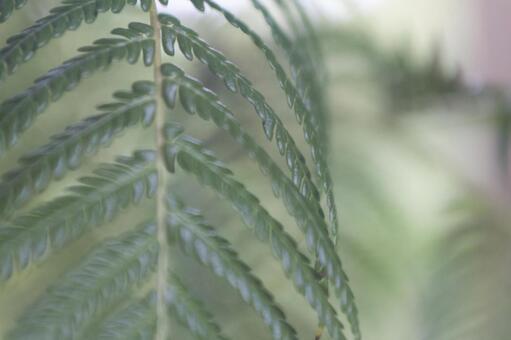 蕨類植物1