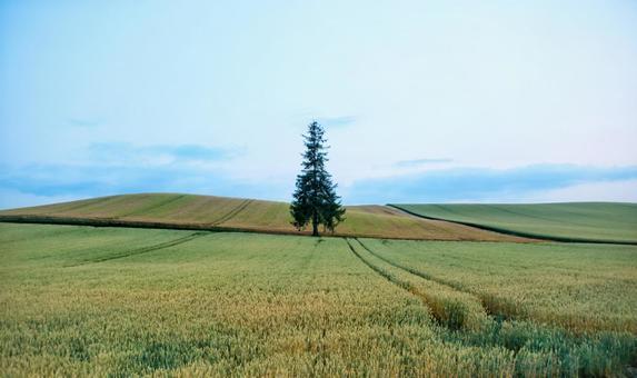 비 에이 신록의 크리스마스 트리 나무