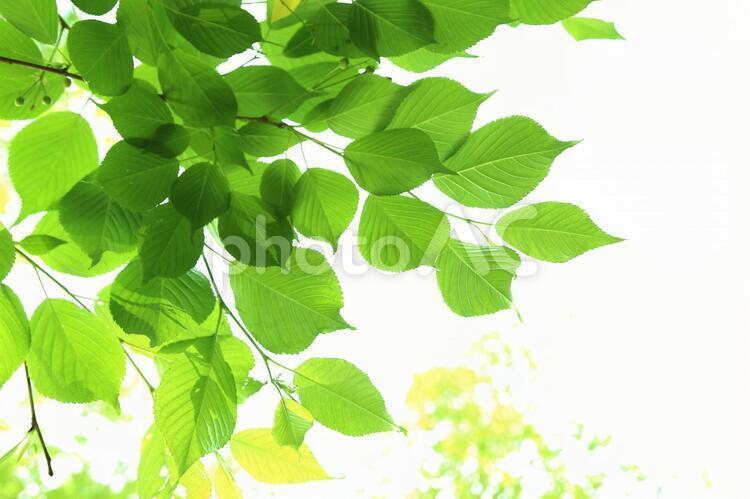 新緑23の写真