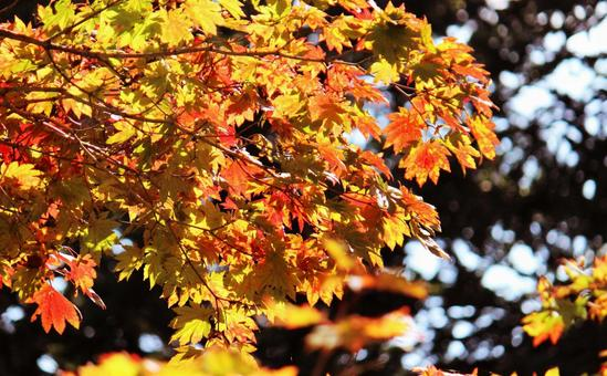 Autumn leaves on a sunny day ③