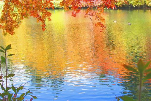 Karuizawa / Kunisomi pond reflecting autumn leaves