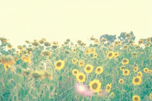 해바라기의 꽃