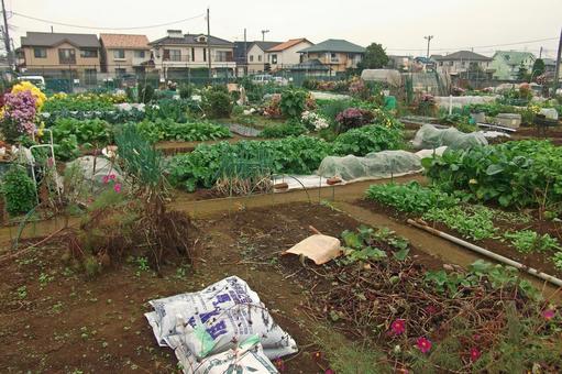 Home garden # 2