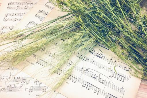 자연과 음악 치료
