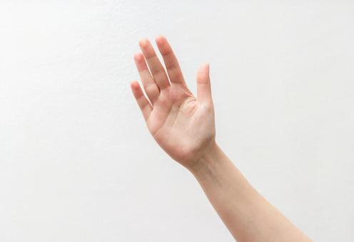 显示手掌1