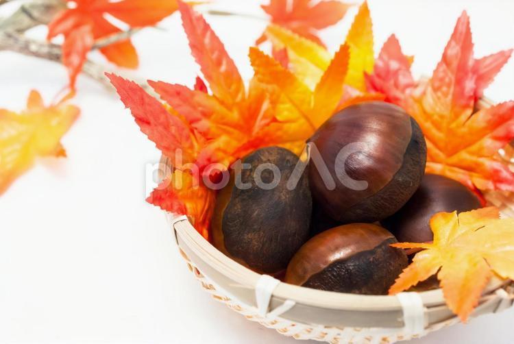 栗と紅葉の写真