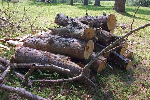 얇은 나무