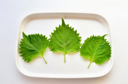 Leaves of large leaves / perilla (white background)