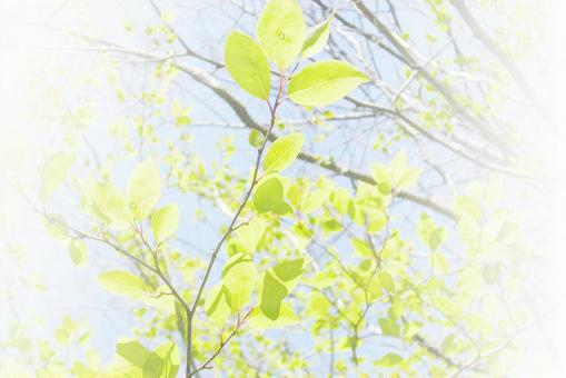 Leaf / background