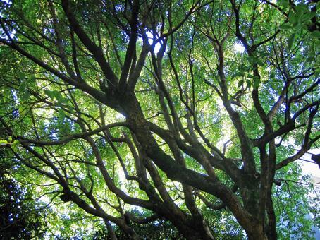 햇살 나무