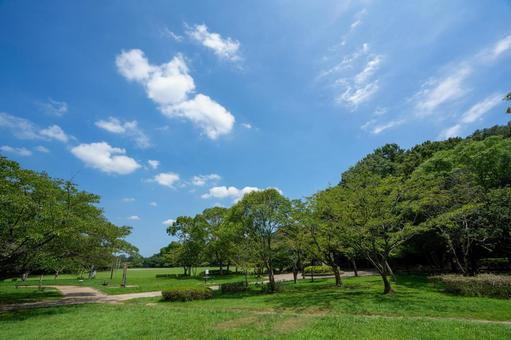 Fresh green and blue sky in the park