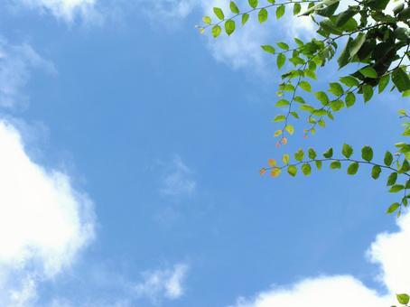 Shady and blue sky 2