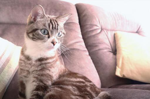 A cute cat image image of a tabby cat staring at you