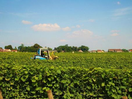 부르고뉴의 와인 포도밭