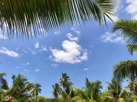 세이셸 남국의 하늘과 야자수 잎