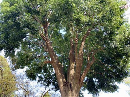 나무 껍질 나무 질감