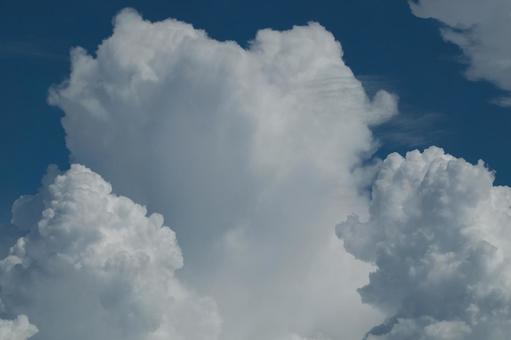 It's like a cat cloud