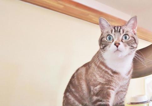 고양이 고양이 고양이 고양이 이미지 응시 고양이 보는 고양이 가만히 응시 고양이