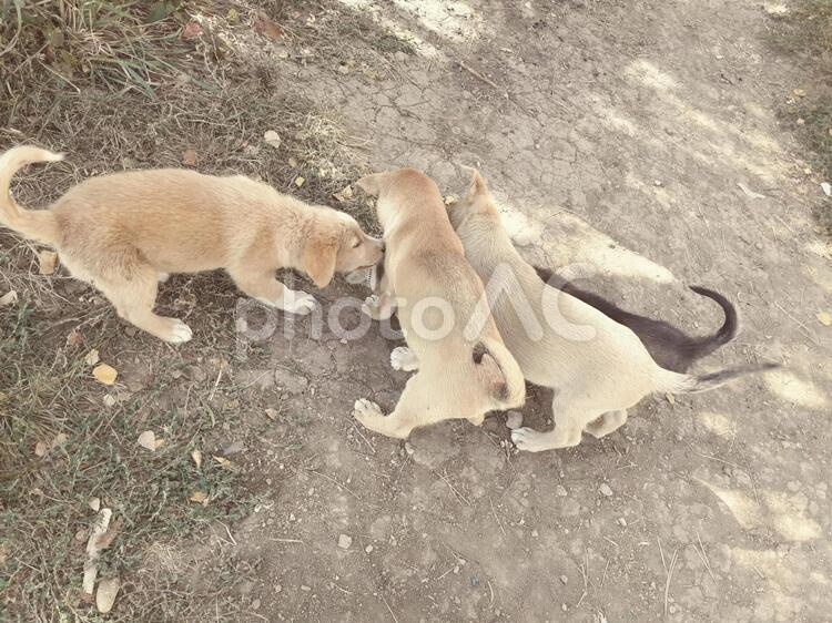 遊んでいる子犬たちの写真